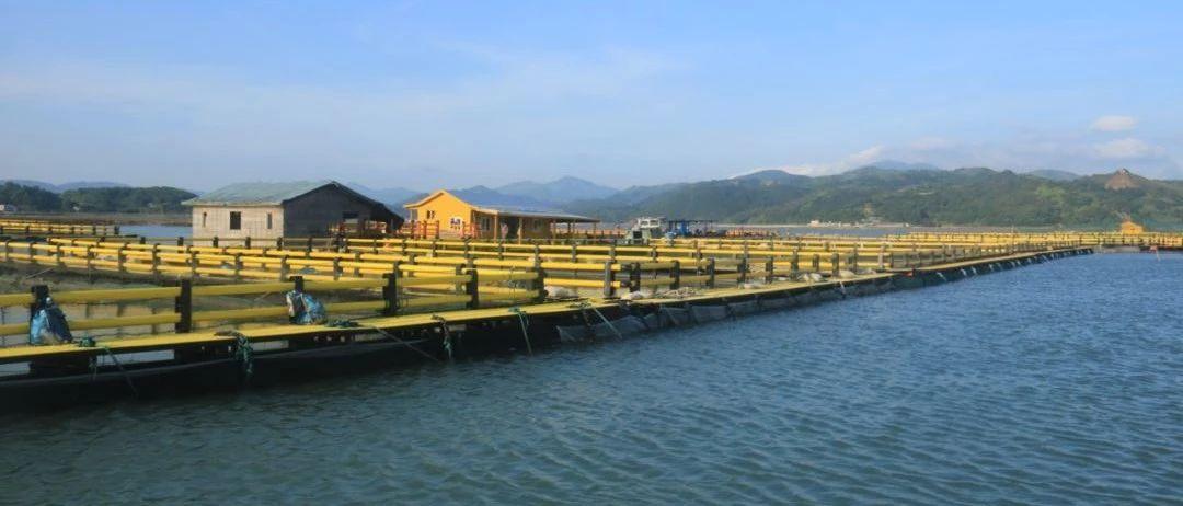 前岐新型养殖设施换来新效益,看看鱼儿品质就知道了