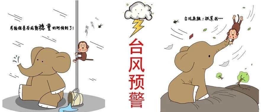 """""""利奇马""""加强为超强台风,福鼎提升防台风应急响应为Ⅲ级!"""