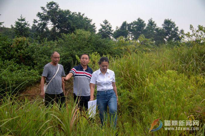 贯岭:因地制宜 严厉打击破坏森林资源行为