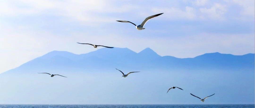 嵛山岛的美丽写真,为何出现在清华大学里?