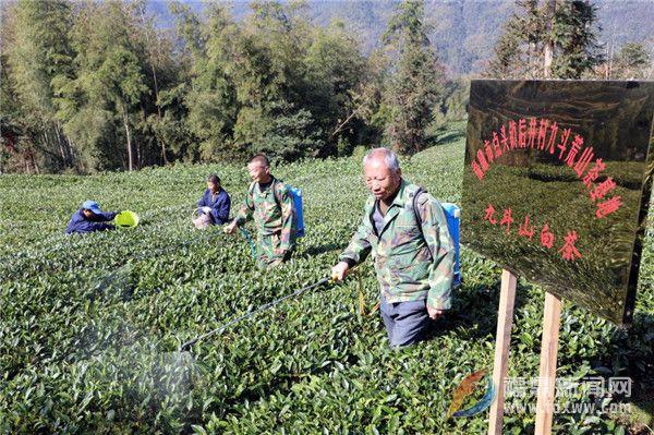 福鼎市农技专家赴点头茶山指导生态茶园冬季封园管理