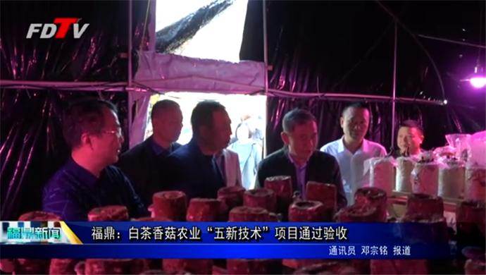 """福鼎:白茶香菇农业""""五新技术""""项目通过验收"""
