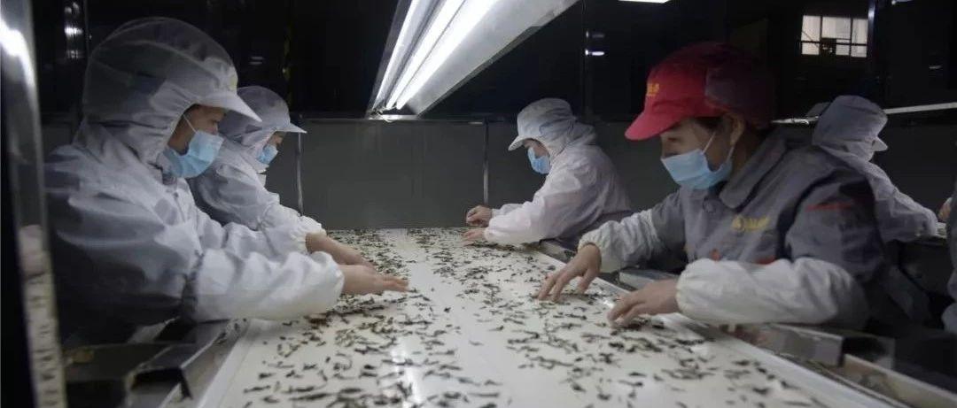 防疫生产齐头并进,福鼎有序推进企业复工