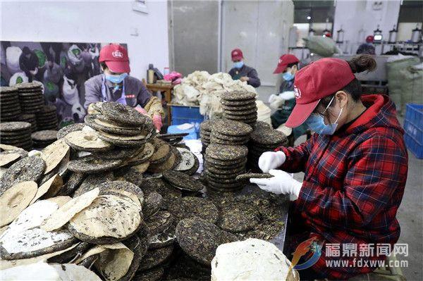 茶乡点头:防疫生产两不误,茶企茶农齐忙碌