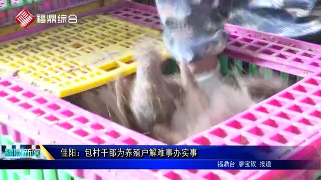 佳阳:包村干部为养殖户解难事办实事