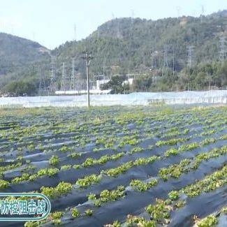 """贴心!农技服务队为春耕生产""""护航"""""""