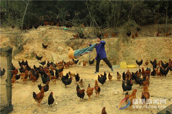 农业部门网上吆喝,助力店下农民养鸡滞销难题