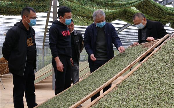 蔡梅生深入翁江村开展白茶溯源管理数据平台调研