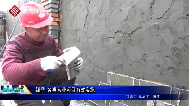 福鼎:各类茶业项目有效实施