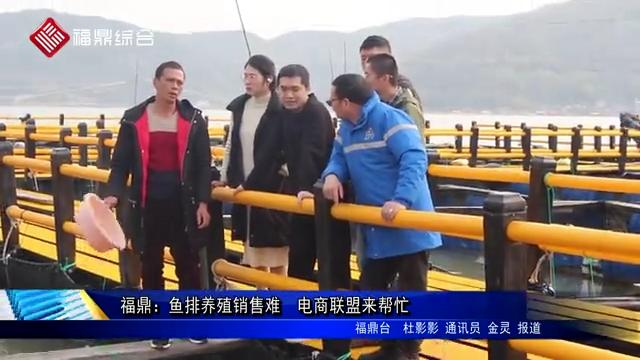 福鼎:鱼排养殖销售难 电商联盟来帮忙