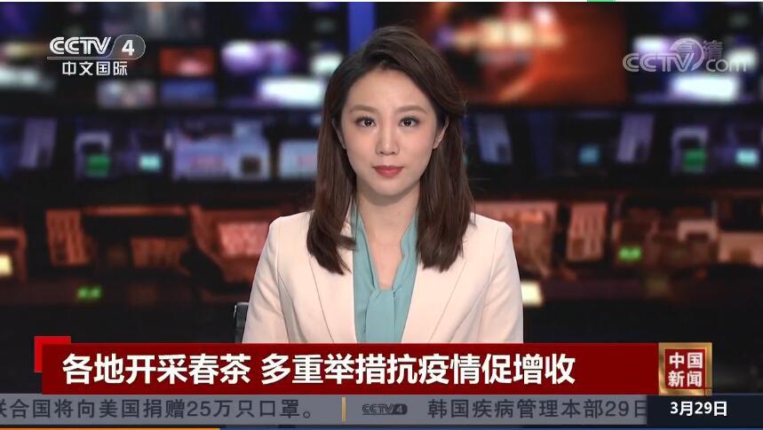 [央视中文国际]各地开采春茶 多重举措抗疫情促增收