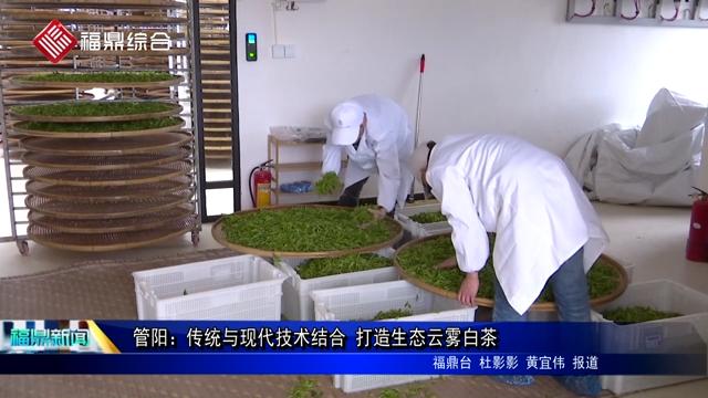 管阳:传统与现代技术结合 打造生态云雾白茶