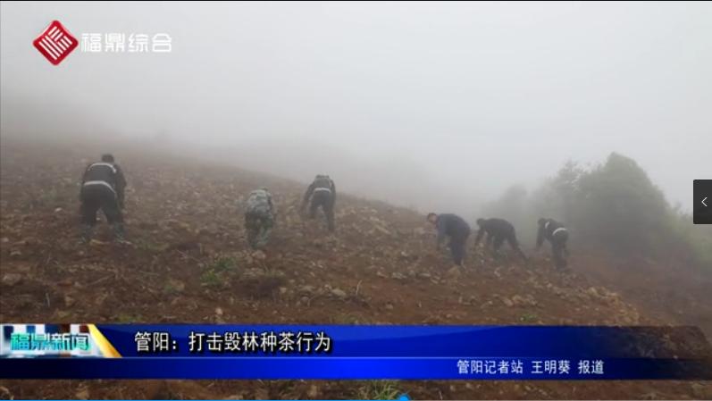 管阳:打击毁林种茶行为