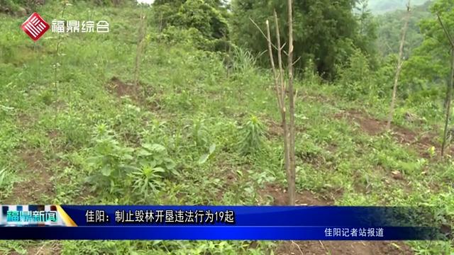 佳阳:制止毁林开垦违法行为19起