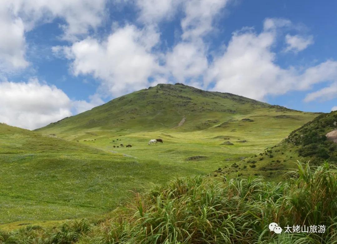 夏天来啦,我想和你一起去嵛山岛吹吹风