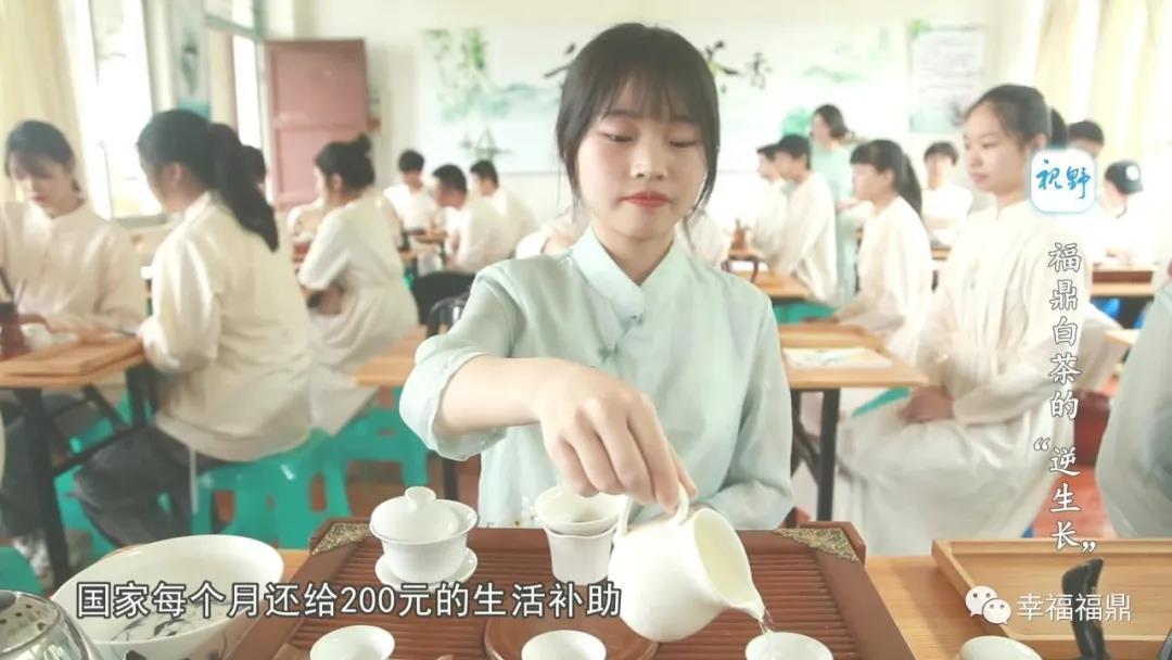 """【视野】福鼎白茶的""""逆生长"""""""