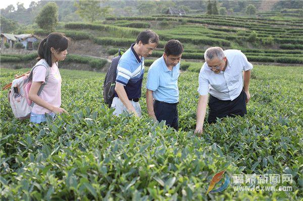 点头镇举办茶叶质量安全工作推进会暨茶叶质量安全培训会