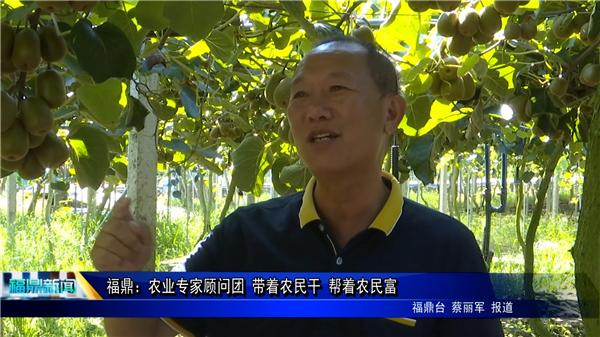 福鼎:农业专家顾问团 带着农民干 帮着农民富