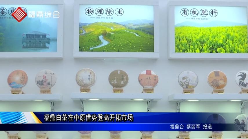 福鼎白茶在中原借势登高开拓市场