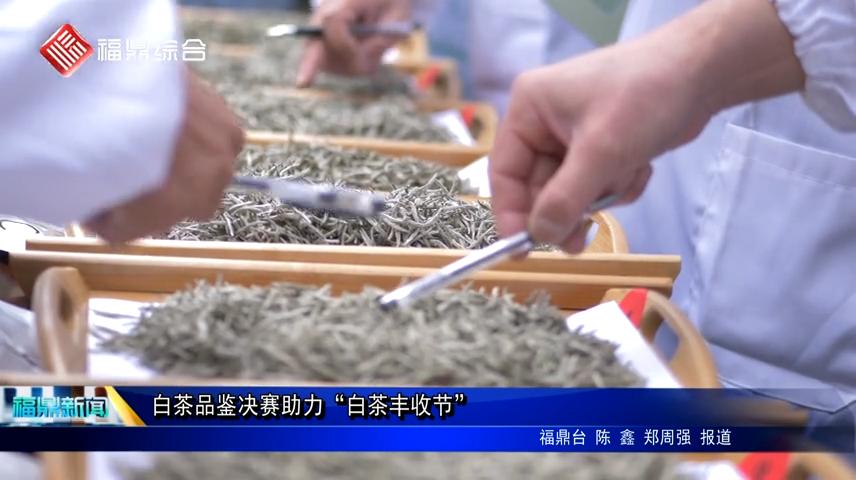 """白茶品鉴决赛助力""""白茶丰收节"""""""