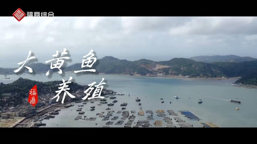 【短视频】--福鼎大黄鱼养殖