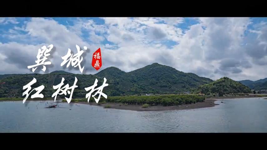 【短视频】--- -巽城红树林