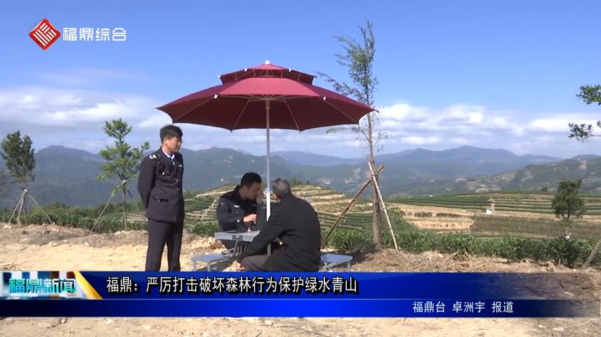 福鼎:严厉打击破坏森林行为保护绿水青山