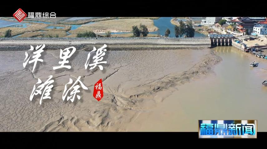 【短视频】洋里溪滩涂