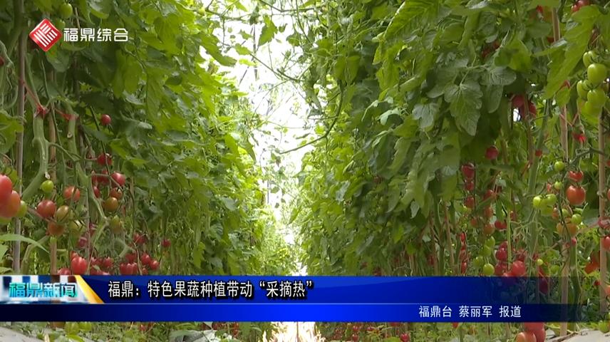 """福鼎:特色果蔬种植带动""""采摘热"""""""