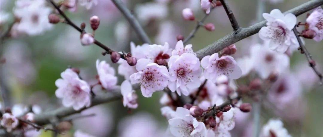 嗨,福鼎早春的花开了~好花赏起来