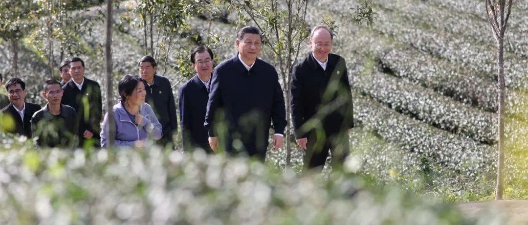 习近平:没有中华五千年文明,哪有我们今天的成功道路