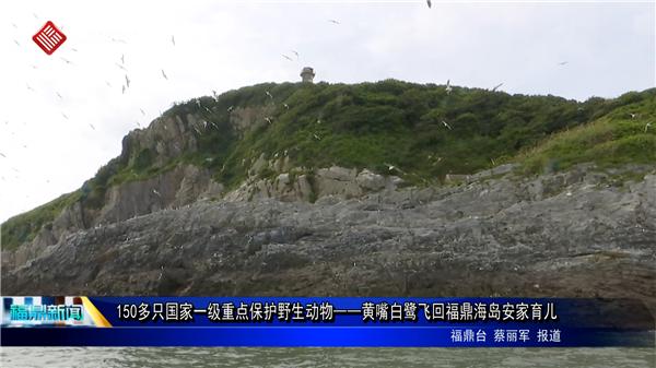 150多只国家一级重点保护野生动物——黄嘴白鹭飞回福鼎海岛安家育儿