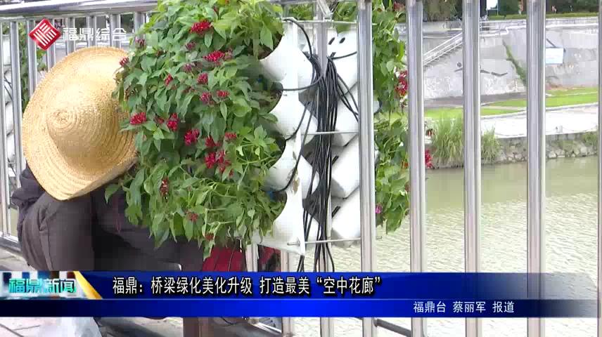 """福鼎:桥梁绿化美化升级 打造最美""""空中花廊"""""""